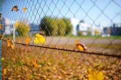 Det metalliska netto-formade staketet från tråd med höstbladet stucked i det på en bakgrund av suddighetsstaden Royaltyfri Foto
