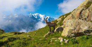 Det mystiska landskapet av bergsheen nära Mont Blanc i fet royaltyfria bilder