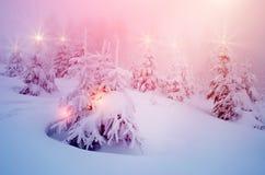 Det mystiska vinterlandskapet med träd på julljus skiner Royaltyfri Foto