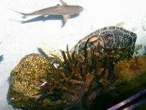 Det nationella akvariet Arkivfoton