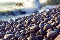 Det naturliga landskapet Fotografering för Bildbyråer
