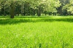 Det naturliga landskapet på våren Royaltyfri Fotografi
