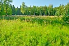 Det naturliga landskapet på våren Arkivbilder