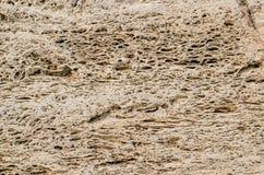Det naturliga skalet vaggar för bakgrund Arkivbild