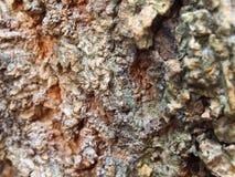 Det naturliga trädskället Arkivbild