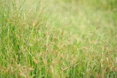 Det naturligt grönt nytt gräslandskapet och ljus reflekterar i morgon Royaltyfri Foto