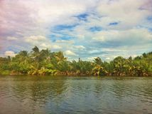 Det naturligt längs floden Royaltyfria Bilder