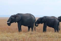 Masai mara Royaltyfria Bilder