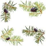 Det nya året dekorerade mallen för hälsningar med julgranar med bollar som isolerades royaltyfri illustrationer