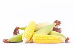 Det nya örat av majs på majskolvkärnor eller korn av mogen havre på vit bakgrund konserverar den isolerade grönsaken Fotografering för Bildbyråer