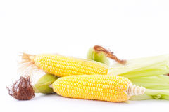 Det nya örat av majs på majskolvkärnor eller korn av mogen havre på vit bakgrund konserverar den isolerade grönsaken Royaltyfri Bild