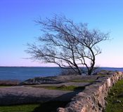det oisolerade havet stonewall treen royaltyfria foton