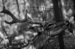 Det okända staket arkivfoto