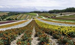 Det orange vit- och gulingblommafältet sluttar ner från berget med molnet royaltyfri foto