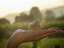 Det organiska äpplet i kvinnor gömma i handflatan på den skinande dagen, bybakgrund Royaltyfri Foto