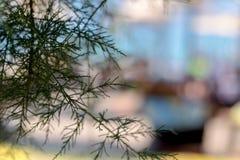 Det oskarpa skottet av sörjer träd royaltyfri fotografi