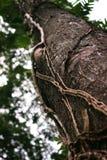 Det oskarpa trädet i skogen arkivfoton