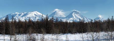 Det panorama- vintriga vulkanlandskapet och landskap övervintrar skogen på den Kamchatka halvön Royaltyfri Bild