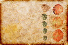 det paper havet shells tappning Fotografering för Bildbyråer