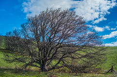 Det perfekta klättringträdet Arkivfoton