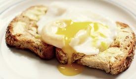 Det perfekta tjuvjagade ägget Royaltyfri Bild
