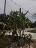 Det QWERTY trädet arkivbild