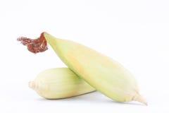Det rå örat av majs på majskolvkärnor eller korn av mogen havre på vit bakgrund konserverar den isolerade grönsaken Arkivbild