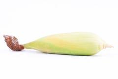 Det rå örat av majs på majskolvkärnor eller korn av mogen havre på vit bakgrund konserverar den isolerade grönsaken Royaltyfri Fotografi