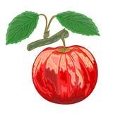Det röda äpplet med gräsplan lämnar vektorillustrationen Royaltyfria Foton