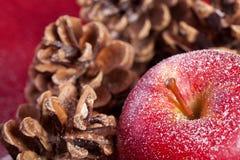 Det röda äpplet och sörjer kottar royaltyfria foton