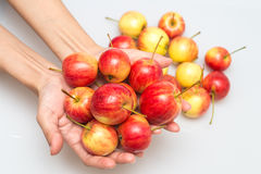 Det röda äpplet växer i hand Arkivbilder