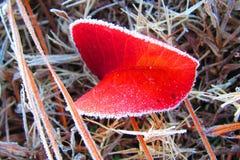 Det röda bladet med frost fodrade kanter sörjer in sugrör fotografering för bildbyråer