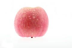 Det röda Fuji äpplet royaltyfri foto