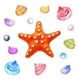 det röda havet shells sjöstjärnan för flygillustration för näbb dekorativ bild dess paper stycksvalavattenfärg Arkivbild