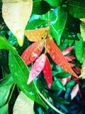 Det röda naturligt Arkivbilder