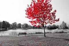 Det röda trädet över parkerar bänken Arkivfoto