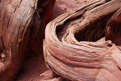 Det röda trädet rotar Fotografering för Bildbyråer