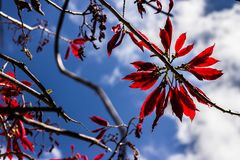 Det rött i himlen gillar ljusa diamanter royaltyfri fotografi