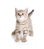 Det roliga husdjuret behandla som ett barn kattkattungen på vit bakgrund Royaltyfri Fotografi