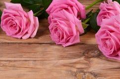 Det rosa härligt steg en bakgrund Arkivfoto