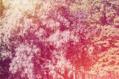 Det rosa trädet lämnar bakgrund Fotografering för Bildbyråer