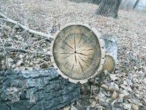 Det runda trädet ligger i mitt av skogen royaltyfri bild