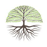 Det runda trädet med rotar arkivbilder