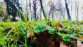 Det ` s precis ett gräs Royaltyfri Foto