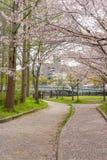 Det Sakura trädet (körsbärsröd blomning) i Sakuranomiya parkerar En berömd parkera Royaltyfria Foton
