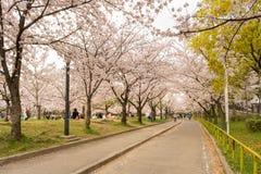 Det Sakura trädet (körsbärsröd blomning) i Sakuranomiya parkerar En berömd parkera Arkivbild