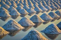 Det salta fältet Fotografering för Bildbyråer