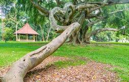 Det scarry trädet Royaltyfri Foto