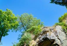 Det sceniska berglandskapet med vaggar och träd arkivbild