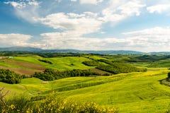 Det sceniska landskapet med gröna kullar, trädet och guling blommar i fo Arkivfoto